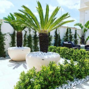 Cement planters - Elegance Planter
